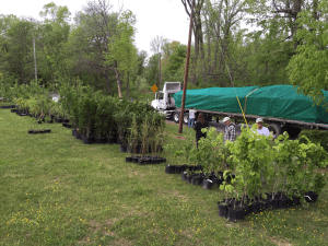 Half of a truckload ready for planting