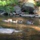 Join Us! Sleepy Creek Watershed Annual Meeting Dec. 3rd